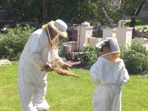 bee-inspection